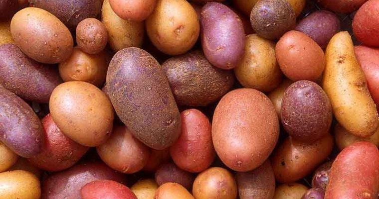 Kartoffelferie!