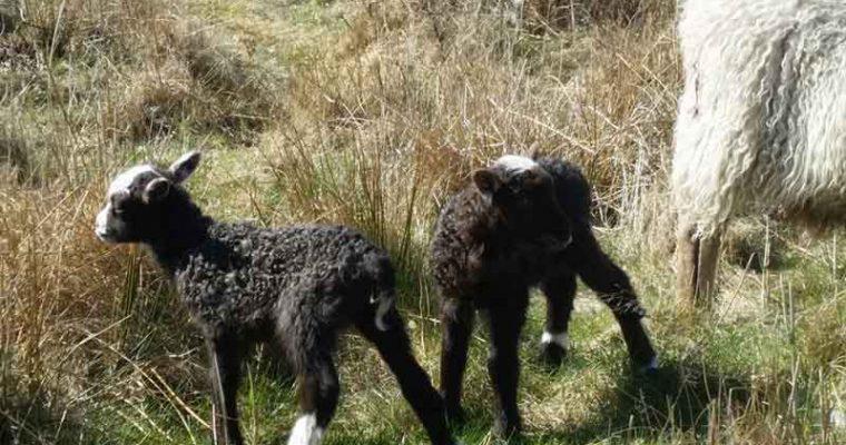 Efterår er gryderetter: Irsk stuvning